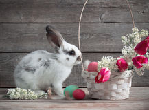Rabbit with Easter eggs Royalty Free Stock Photos