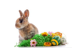 Rabbit with Easter eggs Royalty Free Stock Photo