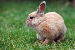 Rabbit, Easter Stock Photo