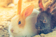 Rabbit for easter holiday ( Filtered image processed vintage eff Royalty Free Stock Photos