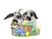 Rabbit and Easter set Stock Photography