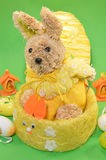 A rabbit of Easter. Royalty Free Stock Image