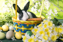 Rabbit eating carrot in a basket. Around the flowers, eggs Stock Photography