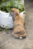 Rabbit eating carrot tops in garden Stock Photos