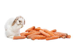 Rabbit eating carrots Stock Images