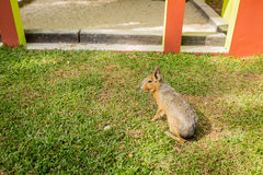 Rabbit eating grass in the garden Royalty Free Stock Photo