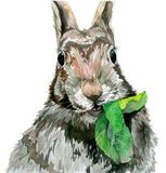 Rabbit eating a leaf and staring straight. Watercolor illustration royalty free illustration