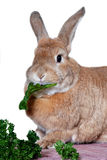 Rabbit eating vegetables stock photo