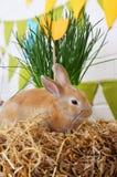 Rabbit eats hay Stock Photos