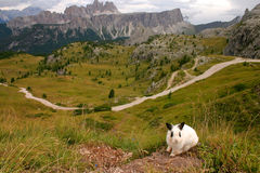 Rabbit on the edge Stock Photography