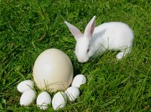 Rabbit and eggs Royalty Free Stock Images