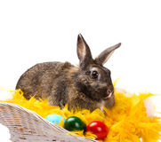 Rabbit with  eggs  in  basket Royalty Free Stock Image