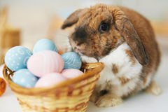 Rabbit and eggs Royalty Free Stock Photo