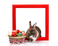 Rabbit with  eggs  in  frame Royalty Free Stock Photos