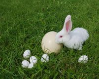 Rabbit and eggs on a grass Royalty Free Stock Photos