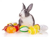 Rabbit with eggs on white background Stock Photography