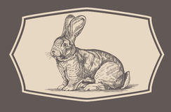 Rabbit in engraving style. Stock Photos