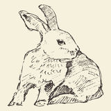 Rabbit, engraving style vintage hand drawn sketch Royalty Free Stock Images