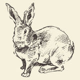 Rabbit, engraving style vintage hand drawn sketch Stock Images