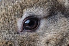 Rabbit eye Royalty Free Stock Photos
