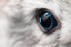 Rabbit eye Stock Images