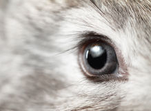 Rabbit eye Stock Photos