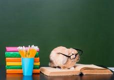 Rabbit with eyeglasses sitting on the books near empty green chalkboard.  Stock Photo