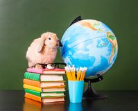 Rabbit with eyeglasses sitting on the books near empty green chalkboard Royalty Free Stock Images