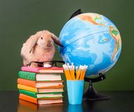 Rabbit with eyeglasses sitting on the books near empty green chalkboard Stock Images