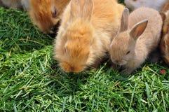 Rabbit family feeding on grass Stock Photography