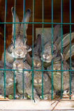 Rabbit family Royalty Free Stock Photo