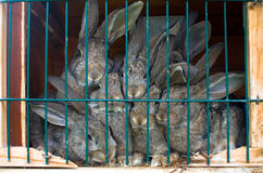 Rabbit family Stock Images