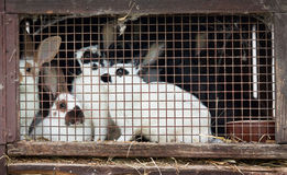 Rabbit family in a small hutch Stock Photo