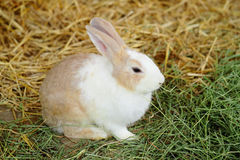 Rabbit in farm Royalty Free Stock Images