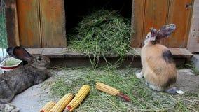 Rabbit farm stock video footage