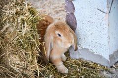 Rabbit farm royalty free stock photos