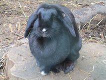 A rabbit in the farm in Crystal Palace Park stock photography