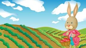 A rabbit and a farm Royalty Free Stock Photos