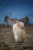 Rabbit in the farm Stock Images