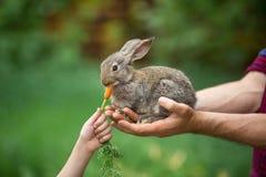 Rabbit. Feeding animal Stock Images