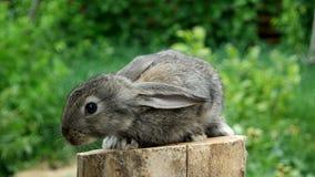 Rabbit. Feeding animal stock video