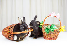 Rabbit fell out of the basket next to another rabbit Royalty Free Stock Photography