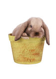 Rabbit in flower pot isolated Royalty Free Stock Image