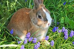 Rabbit in flowers Royalty Free Stock Photography