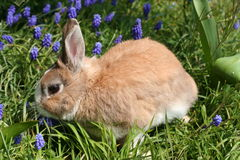 Rabbit in flowers Stock Photography