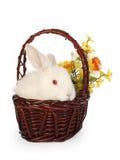 Rabbit flowers. Albino, white rabbit in basket, easter Stock Photo