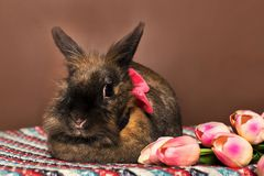 Rabbit with flowers , spring, Royalty Free Stock Images