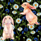 Rabbit among flowers. Watercolor seamless pattern Stock Photos