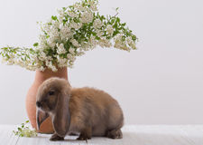 Rabbit with flowers royalty free stock images