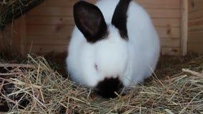 Rabbit food stock video